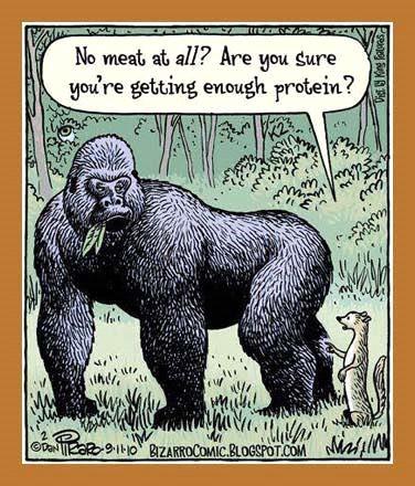 Blog Ronnie Möller - Gorilla